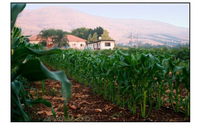 Vue sur des champs de blé à Savta Ilanit (Courtesy Savta Ilanit)