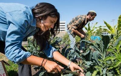 Illustration : Des membres de Urban Adamah, Laura Ruiz-Needleman (à gauche) et Dani Friedenberg (à droite), travaillant à la ferme. (Avec l'aimable autorisation de Urban Adamah)