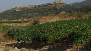 Plateau du Golan (Crédit : Flash90)