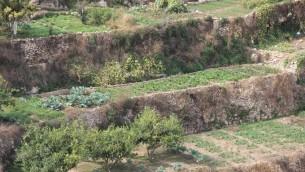 Les terrasses agricoles du village de Battir (Crédit : autorisation de l'ONG Les Amis de la Terre/Moyen Orient/FoEME)