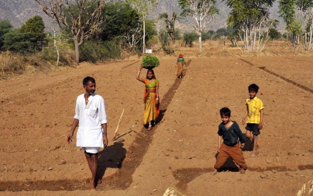 Des Indiens au travail dans un champ à Pushkar au Rajasthan (Crédit : Serge Attal/Flash90)