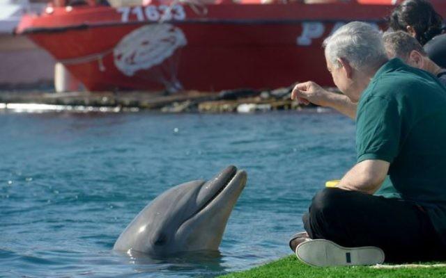 """Le Premier ministre Bejamin Netanyahu joue avec un dauphin à Eilat lors de sa """"Visite Royale"""" avec le producteur Peter Greenberg (Crédit : Avi Ohayon/Bureau de presse du gouvernement)"""