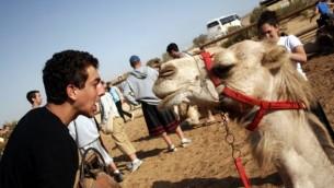 Un jeune homme en pleine conversation avec un chameau - Taglit (Crédit : Melanie Fidler/Flash 90)