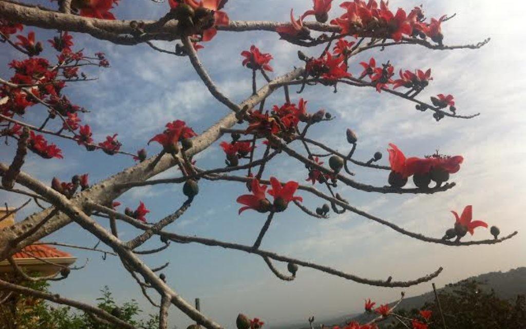 Chaya Gross voudrait savoir si quelqu'un connait le nom de ces fleurs (Crédit : Chaya Gross)