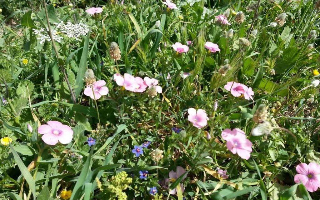 De jolies fleurs (Crédit : Shoshanna Jaskoll)