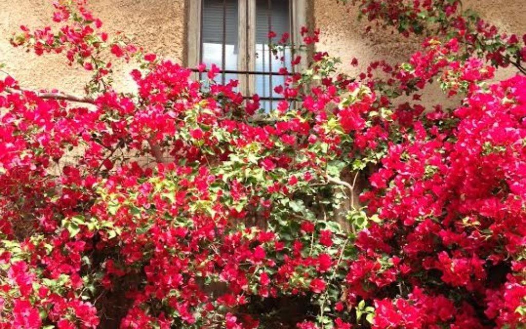 Une maison fleurie ! (Crédit : Crystal Henle)