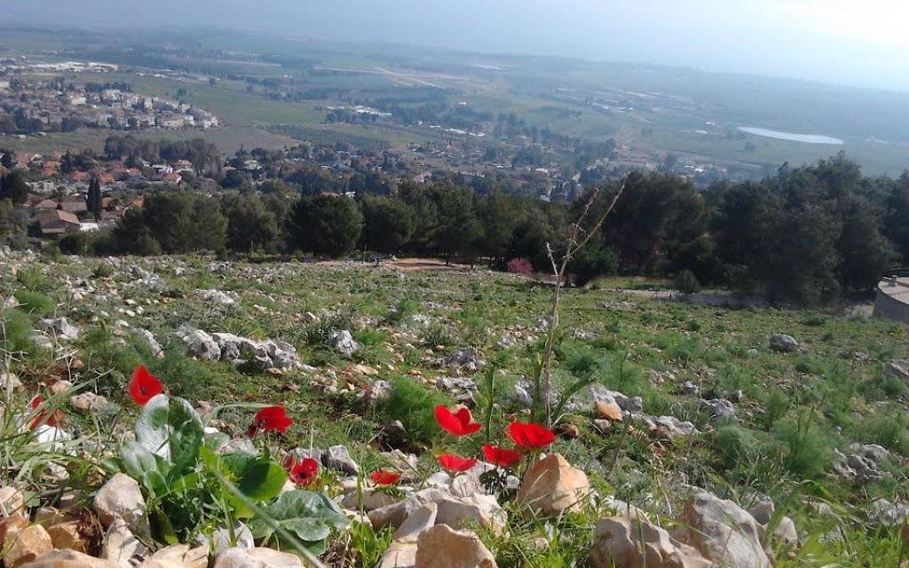 Le printemps à Rosh Pina (Crédit : Yehoshafat Pop)