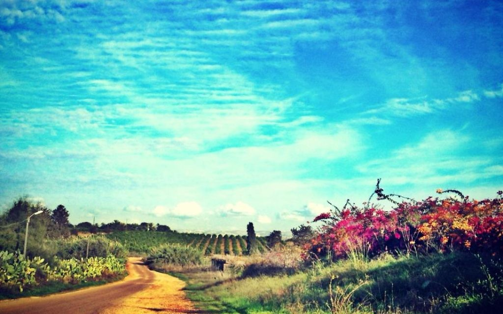 La route de Ramle (Crédit : Sarah Tuttle-Singer)