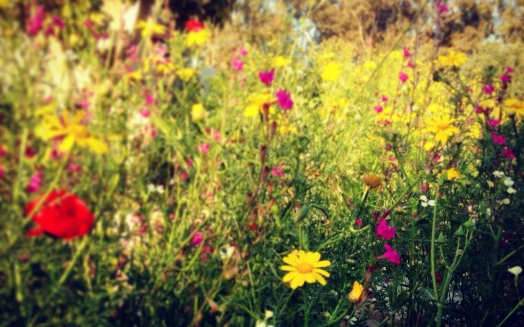 Printemps fleuri (Crédit : Sarah Tuttle-Singer)