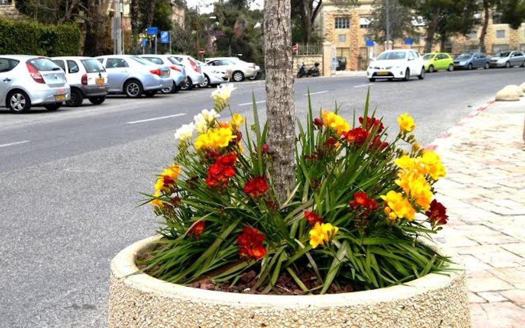 Des nouvelles fleurs à Beit Hanasi, près de la résidence présidentielle (Crédit : Sharon Altshul)