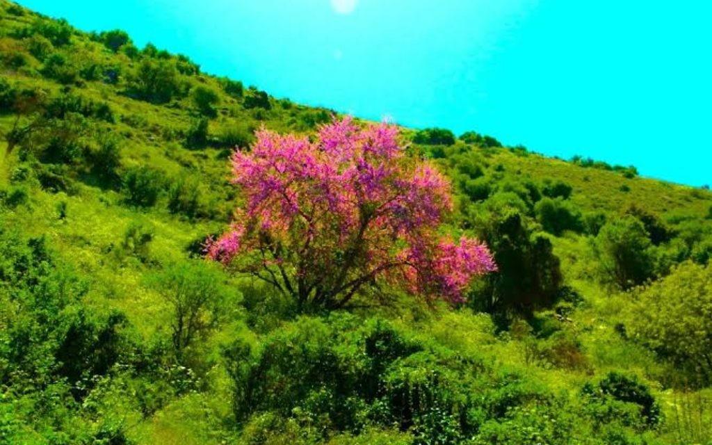 Le printemps au Mont Arbel (Crédit : Josh Fisher)