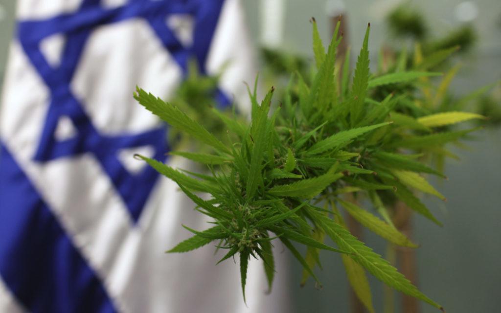 Un plant de cannabis. Illustration. (Crédit : Kobi Gideon/Flash90)