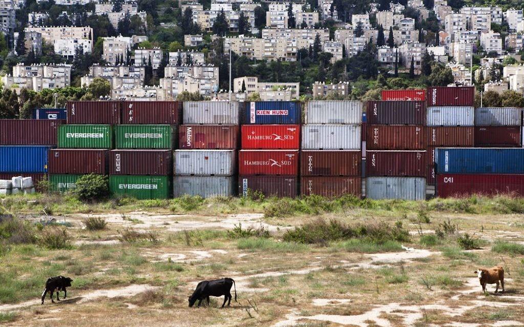 Des vaches, de la tolle et des immeubles à Haifa (Crédit : Frederic Brenner)