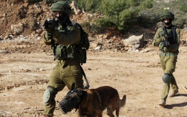 Un capteur d'explosifs développé en Israël pourrait un jour prendre en charge la plupart des fonctions d'un chien de détection. (Crédit : Gershon Elinson/Flash90)