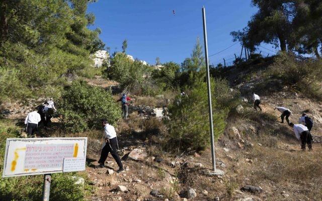 Les bénévoles parcourent une forêt de la région de Jérusalem pour retrouver Aaron Sofer, le mardi 26 août, 2014 (Crédit : Flash90)