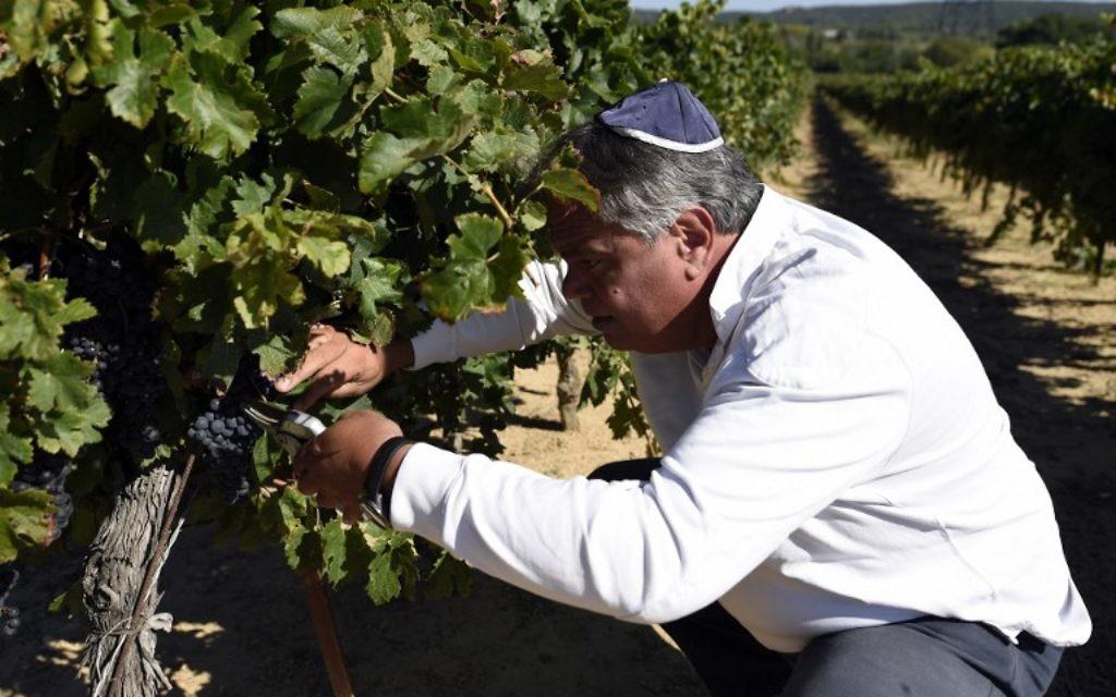 Alexandre Sartène dans sa propriété viticole à Arpaillargues (Crédit : AFP)