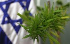 Marijuana (Crédit : Kobi Gideon/Flash 90)