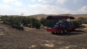 Les trains, les chèvres et les plantes épineuses au Orly Farm Cactus dans le Néguev (Crédit : Jessica Steinberg / Times of Israël)