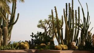 Cactus au jardin botanique d'Ein Gedi (Crédit : Shmuel Bar-Am)