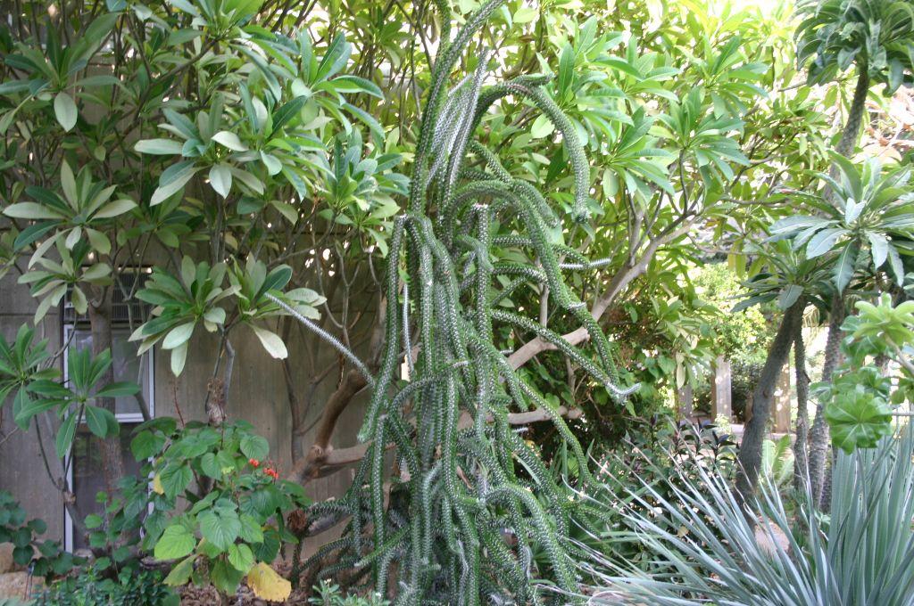 Jardins botaniques d'Ein Gedi Botanical (Crédit : Shmuel Bar-Am)