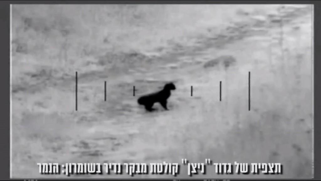 Les caméras de l'armée ont filmé un léopard rare dans le nord de la Cisjordanie (Crédit : capture d'écran idfspox1/Youtube)