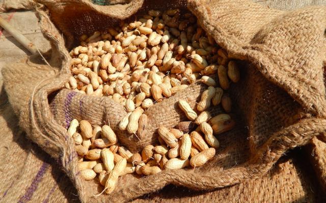 Illustration d'arachide (Crédit : Pixabay/domaine public)