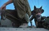 Un soldat israélien accompagné d'un chien (Crédit : Omer Messinger/Flash90)