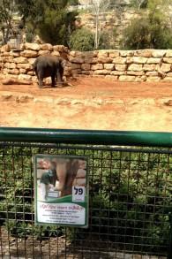 L'affiche de campagne des éléphants pour les élections de 'l'animal le plus populaire' du zoo biblique de Jérusalem tenu le 17 mars 2015 (Crédit : Times of Israel/Stuart Winer)
