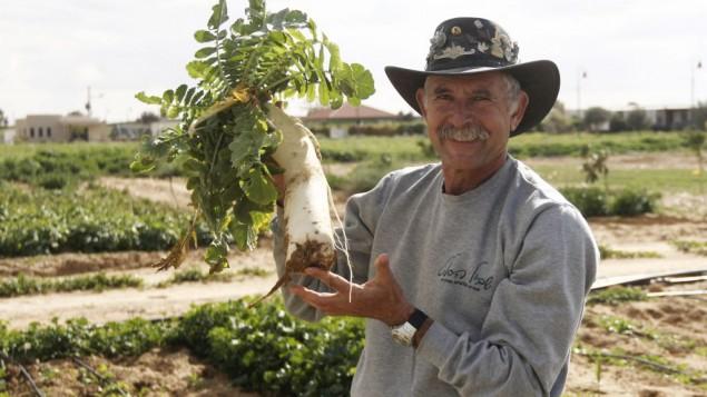 Uri Alon montre un radis japonais qu'il fait pousser dans sa ferme (Crédit : Judah Ari Gross/Times of Israel)
