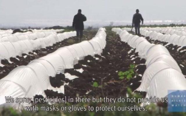 Une ferme dans une implantation israélienne, en Cisjordanie (Crédit : Capture d'écran YouTube)
