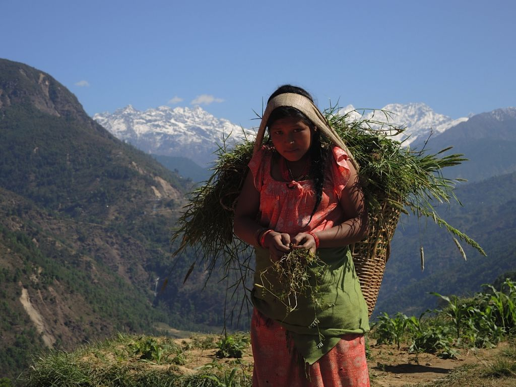 Les villageois sont des agriculteurs et la plupart à peine à gagner leur vie. Le tremblement de terre a tué  une grande quantité de bétail, détruisant les moyens de subsistance ainsi que la vie. Ici, une jeune fille apporte la nourriture restante aux chèvres de sa famille avec la chaîne himalayenne de Lakpa Dorje, sur la frontière avec le Tibet, derrière elle, mai 2015 (Crédit : Melanie Lidman / Times of Israël)