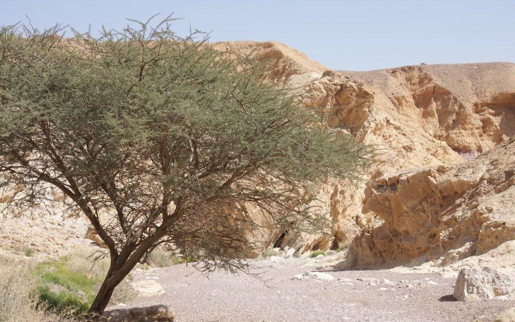 L'entrée du Red Canyon d'Eilat (Crédit : Shmuel Bar-Am)