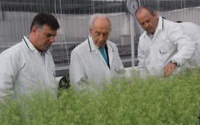 L'ancien président Shimon Peres examine des plantes expérimentales produites par la firme d'agritech israélienne Evogene, lors d'une visite au siège de la société  le 15 juillet 2013. (Photo: autorisation)