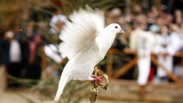 Une colombe sur le site de baptême de Qasr al-Yahud sur le Jourdain le 18 janvier 2010 (Crédit : Abir Sultan / flash 90)