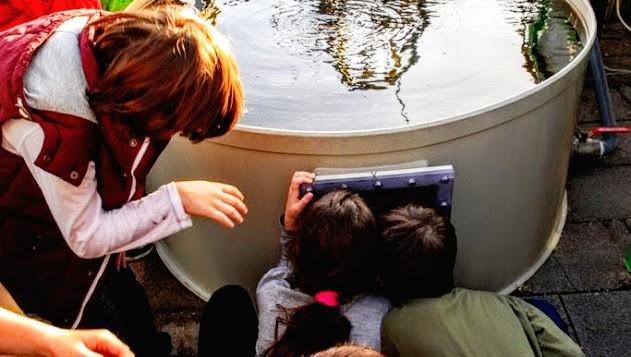 Les participants à un atelier examinent le système aquaponique, qui utilise des déchets de poisson comme engrais pour les plantes. (Crédit : Autorisation Green in the City)