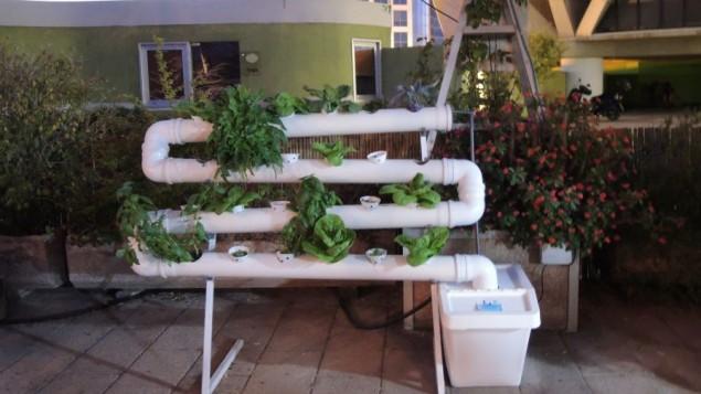 Un système de culture hydroponique construit dans les tuyaux, avec une pompe dans le coin inférieur droit pour faire circuler en permanence la solution fertilisante. Les particuliers peuvent concevoir et acheter leurs propres unités (Crédit : Melanie Lidman / Times of Israël)