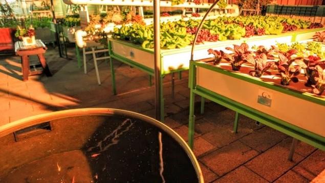 Green in the City a environ 100 mètres carrés pour leur jardin, mais espère l'étendre à 500 mètres carrés de sorte que le jardin peut être financièrement viable (Crédit : Autorisation Green in the City)