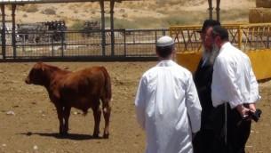 Des rabbins de l'Institut du Temple rencontrent des agriculteurs pour discuter de la meilleure façon de construire une ferme qui permettra de protéger les génisses rouges de tout type de défaut. (Courtoisie Institut du Temple)