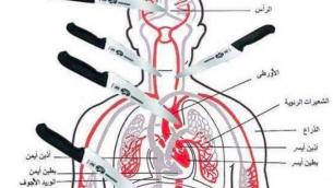 Un tableau anatomique publié sur Facebook montrant les parties du corps à atteindre en poignardant la victime (Photo: Autorisation MEMRI)