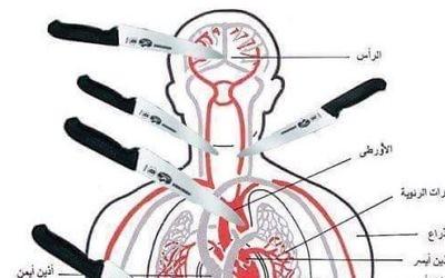 Une planche anatomique publiée sur Facebook par le Gazaoui Zahran Barbah, le 8 octobre, montrant quelles parties du corps viser lorsque l'on poignarde une victime. (Crédit : Autorisation de MEMRI)