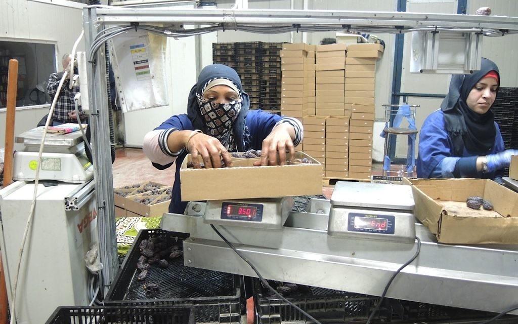 Les travailleurs d'Arbel Farms et l'usine d'emballage près de Masua qui emballent des dattes dans la vallée du Jourdain le 11 novembre 2015. Avigdor Arbel emploie 100 travailleurs palestiniens pendant la haute saison en mars (Crédit : Melanie Lidman/Times of Israel)