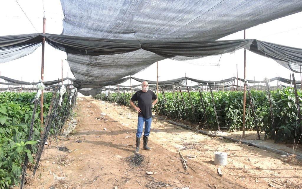 Hanan Pasternak exporte maintenant exclusivement ses poivrons qu'en Russie après que ses échanges avec l'Europe a commencé à décliner il y a cinq ans (Crédit : Melanie Lidman/Times of Israel)