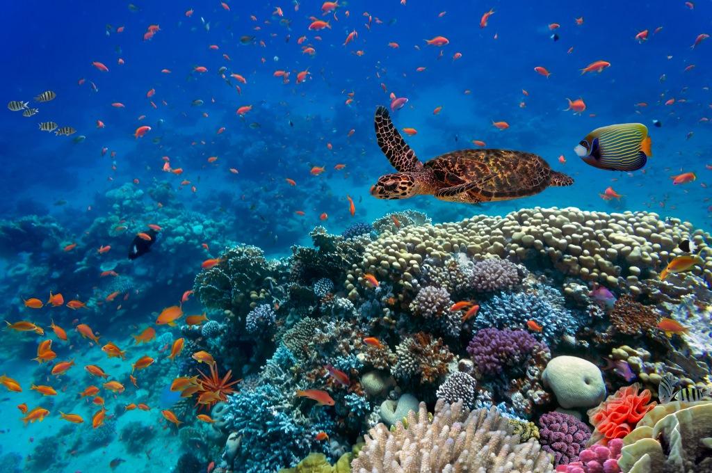 Des poissons tropicaux et des tortues dans la mer Rouge (Crédit :  Shutterstock)