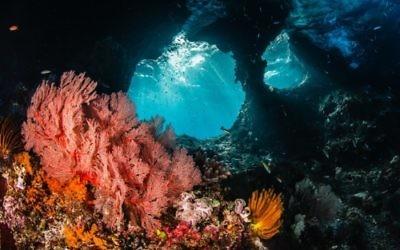 Récifs de Raja Ampat, Indonésie. Credit: Shawn Heinrichs (PRNewsFoto/Vulcan Inc.)