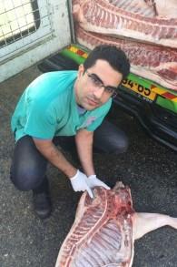 Un vétérinaire municipal examine les carcasses de porcs tombées d'un camion dans les rues de Rishon Lezion, le 14 décembre 2015. (Crédit : porte-parole de la municipalité de Rishon Lezion)