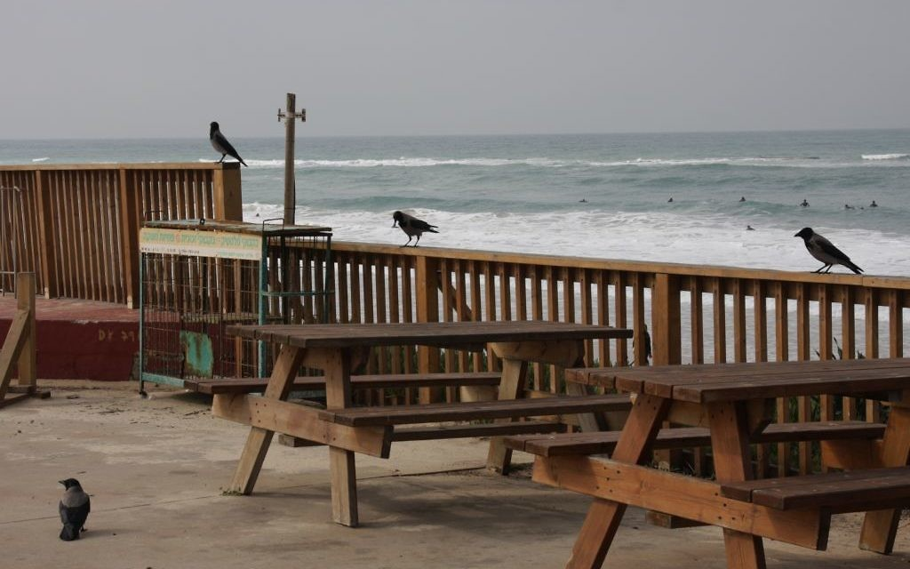 La zone de pique-nique à Palmachim (Crédit : Shmuel Bar-Am)