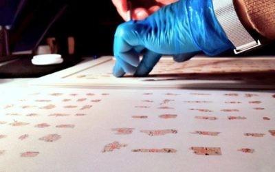 Des fragments des Rouleaux de la mer Morte  (Crédit : Shai Halevi / Autorisation du Israel Antiquities Authority)