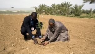 Mamadou Sow (g), Chef de la délégation au sein du Comité international de la Croix-Rouge (CICR) à Gaza, aide un fermier palestinien à planter les graines d'un arbre dans le village de Wadi al-Salqa, près de la frontière de la bande de Gaza avec Israël, le 2 mars 2016. (Crédit : AFP / SAID KHATIB)