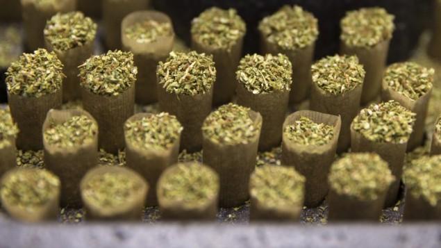 Des feuilles de marijuana prêtes à être fumées, à la serre de B.O.L. Pharma, la deuxième plus grande plantation de cannabis médical du pays, près de Kfar Pines dans le nord d'Israël, le 9 mars 2016. (Crédit : Jack Guez/AFP)