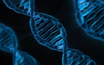 Illustration de l'ADN (Crédit : Pixabay/ Domaine public)
